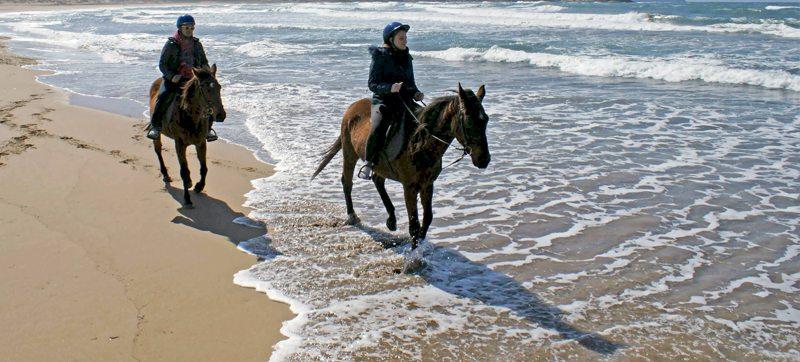 cavalli-mare
