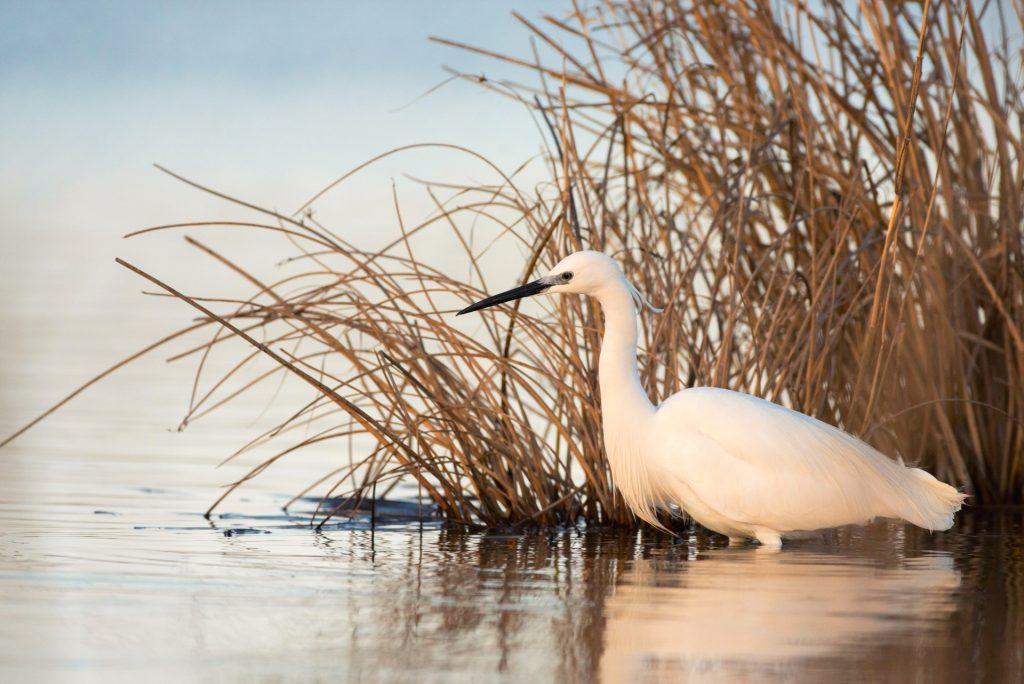 Castiglione della Pescaia Escursioni ed Attività nei dintorni dell'Agriturismo Il Maestrale - Birdwatching